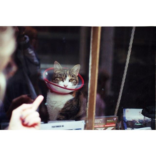 Cat wearing a neck brace