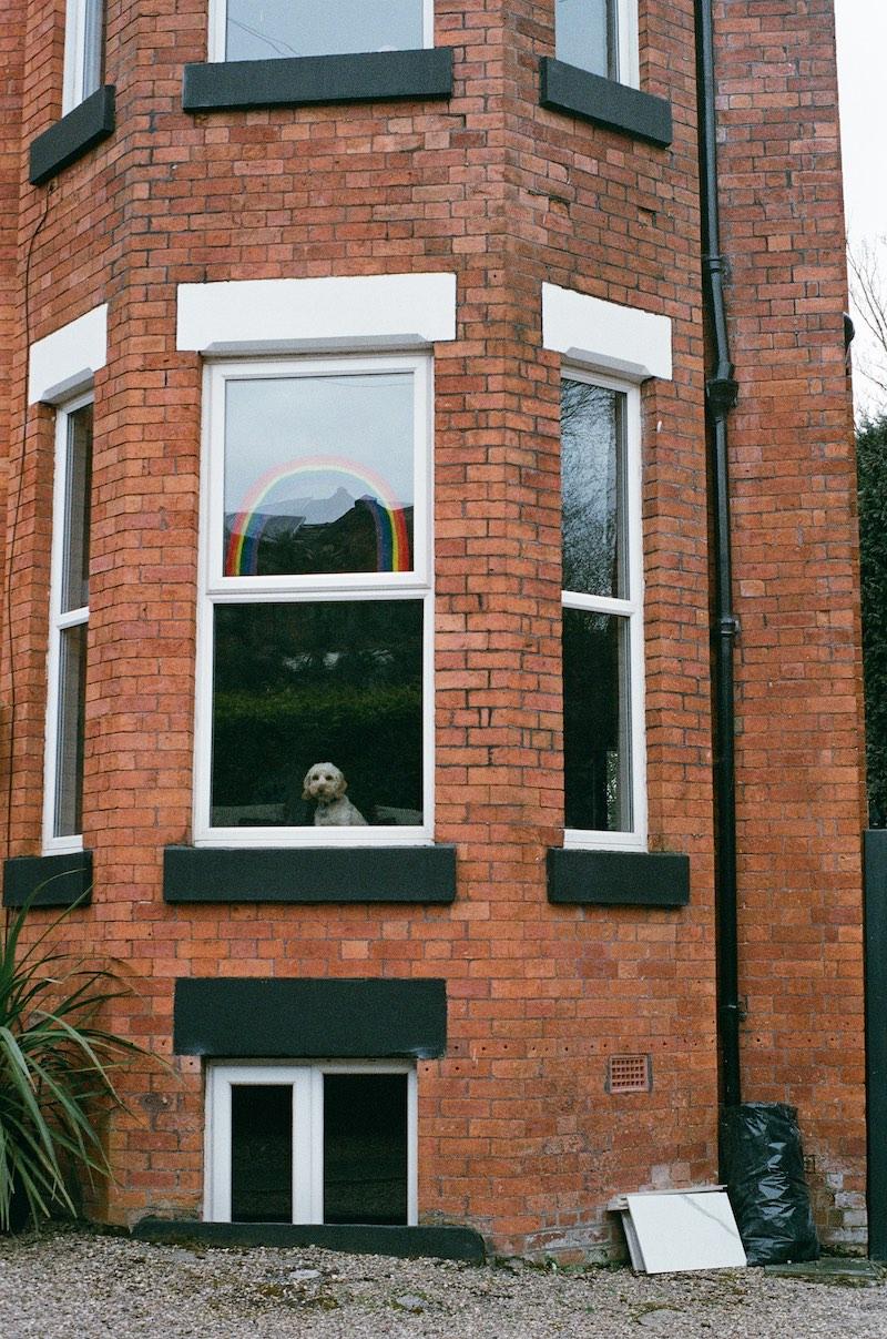 Dog in a house bay window